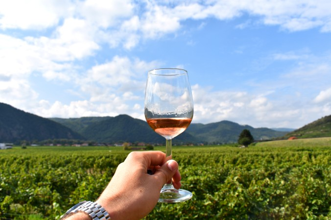 glass of wine being held against a vineyard backdrop