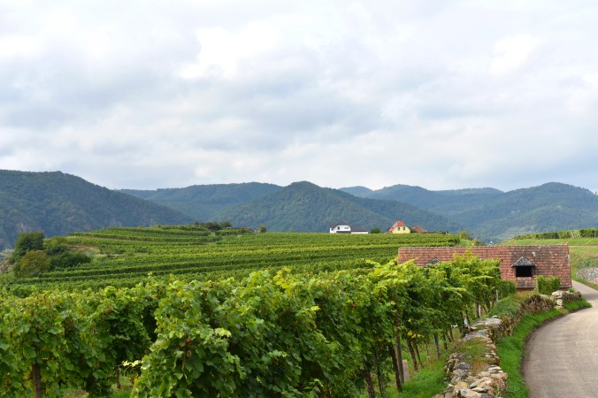 views over a vineyard in the Wachau valley.